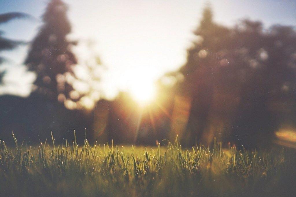 grass, lawn, green